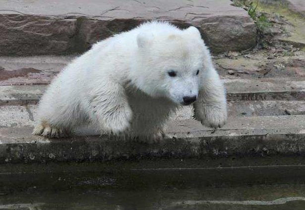 Germany Polar Bear 5962438
