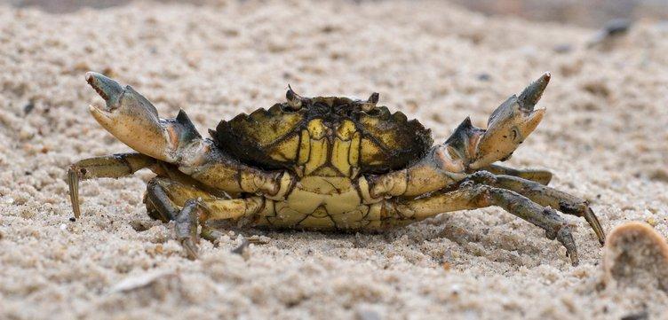 header-green-crabs2.jpg